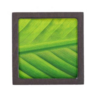 Dynamite Green Premium Trinket Boxes