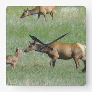 E0003 Cow Elk and Calf Square Wall Clock