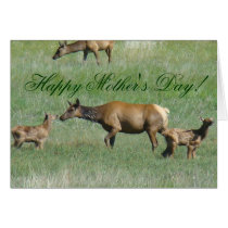 E0003 Cow Elk and Calves Card