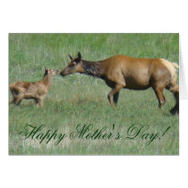 E0003a Cow Elk and Calf Nose to Nose Card