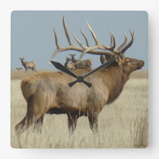 E0004 Big Bull Elk Square Wall Clock