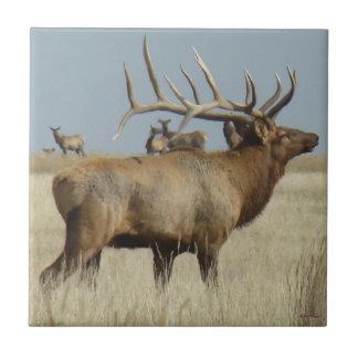 E0004 Big Bull Elk Tile