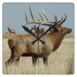 E0004 Big Bull Elk Wallclocks