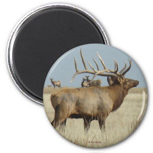 E0004 Bull Elk 2 Inch Round Magnet