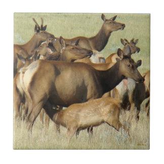 E0007 Cow and Calf Elk Ceramic Tile