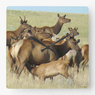 E0007 Cow and Calf Elk Feeding Square Wall Clock