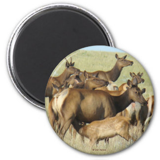 E0007 Cow Elk Magnets
