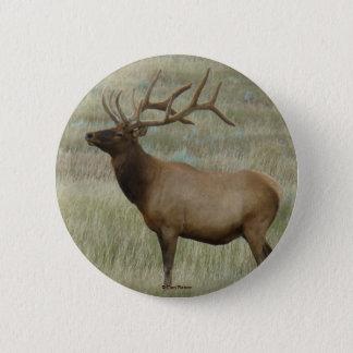 E0008 Bull Elk in Velvet button