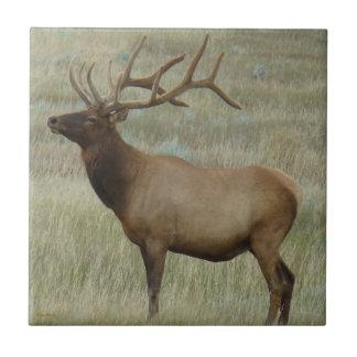 E0008 Bull Elk In Velvet Ceramic Tile