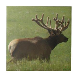 E0012 Bull Elk 1 Bull or 2 ? Ceramic Tile
