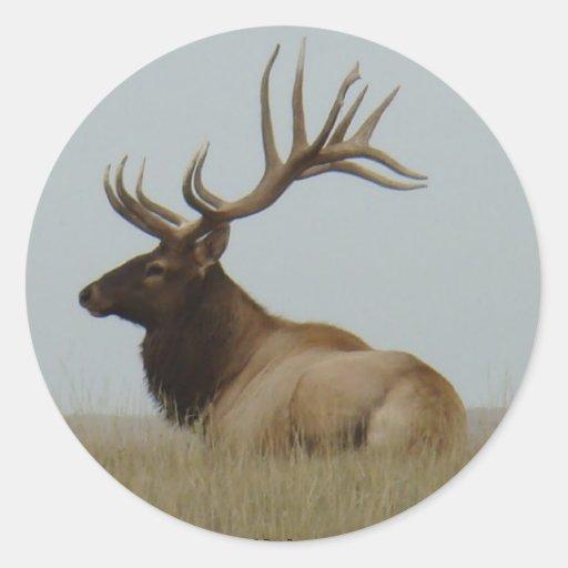 E0015 Bull Elk Sticker
