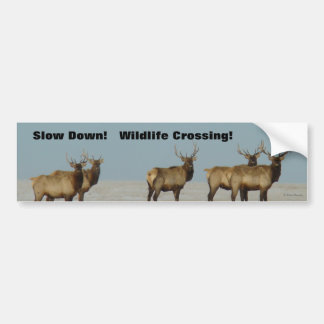 E0018 Bull Elk winter bulls Bumper Sticker