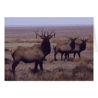 E0019 Bull Elk Double Drop Tines Card