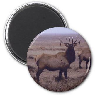 E0019 Bull Elk drop tines Refrigerator Magnet