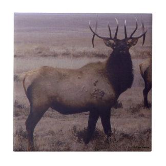 E0019 Bull Elk Tile