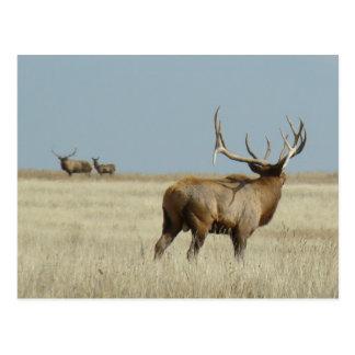 E0020 Bull Elk challenger Postcard