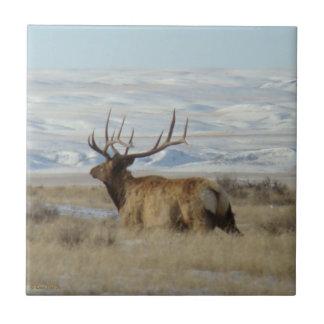 E0022 Bull Elk Tile