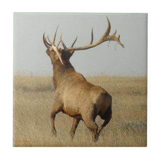 E0023 Bull Elk Tile