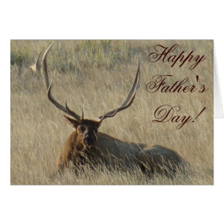 E0025 Bull Elk Laying Cards