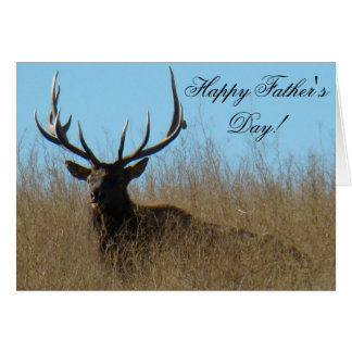 E0026 Bull Elk Laying in Weeds Cards