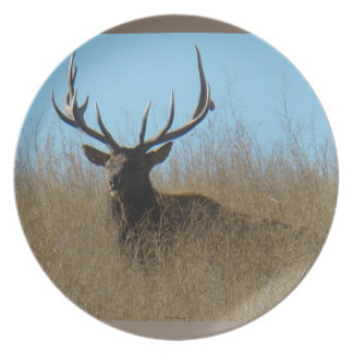 E0026 Bull Elk Laying in Weeds Plate