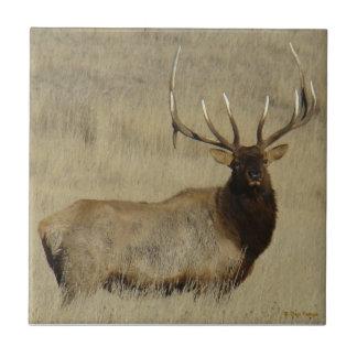 E0030 Bull Elk Tile