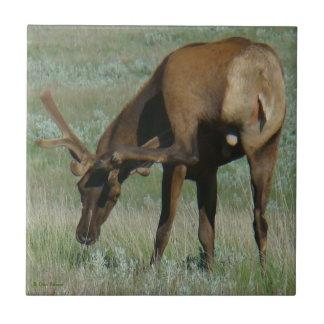 E0032 Bull Elk Ceramic Tile