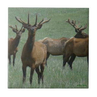 E0033 Bull Elk Tile