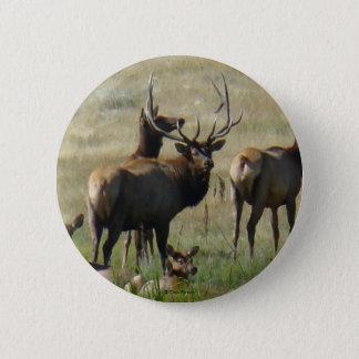 E0036 Bull Elk and Cows button
