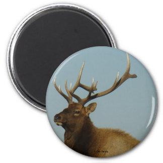 E0042 Bull Elk magnet