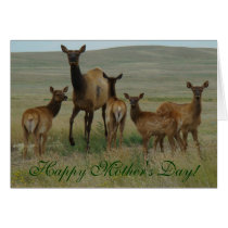 E0044 Cow Elk and Calves Card