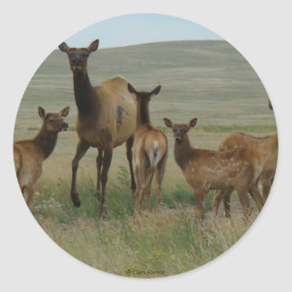 E0044 Cow Elk and Calves Classic Round Sticker