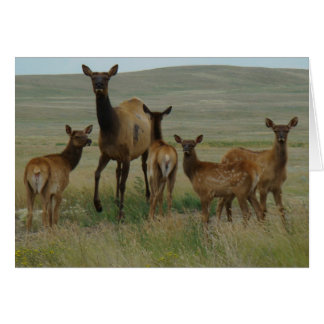 E0044 Cow Elk and Calves Greeting Cards