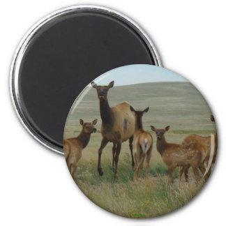 E0044 Cow Elk and Calves Magnet