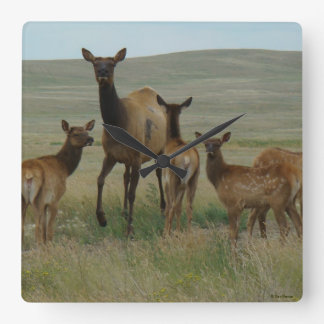 E0044 Cow Elk and Calves Square Wall Clock
