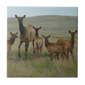 E0044 Cow Elk and Calves Tile