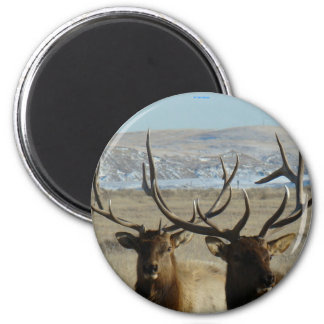 E0045 Bull Elk Magnet