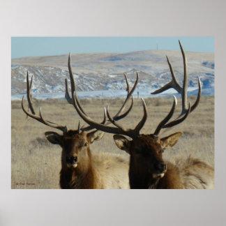 E0045 Bull Elk Poster