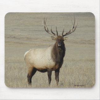E0046 Bull Elk Mouse Pad