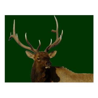 E0050 Bull Elk Post Cards