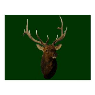 E0051 Bull Elk Head Post Cards
