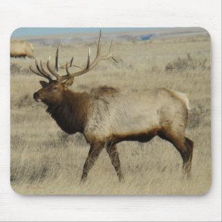 E0055 Bull Elk Mouse Pad