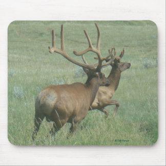 E0056 Bull Elk in Velvet Mouse Pad