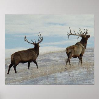 E0057 Bull Elk Lucky 13 Bull Poster