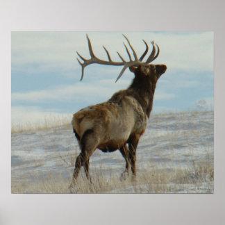E0058 Bull Elk Lucky 13 Bull Poster