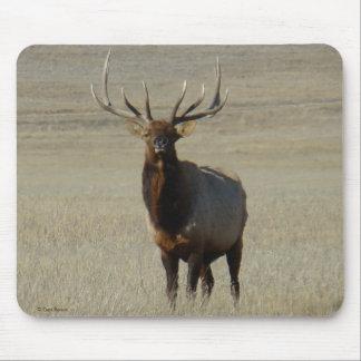E0059 Bull Elk Mouse Pad