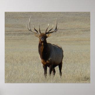 E0059 Bull Elk Poster