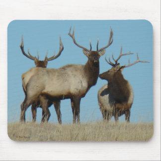 E0060 Bull Elk Sky Lined Mouse Pad