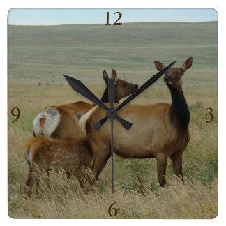 E0061 Cow Elk and Calf Square Wall Clock