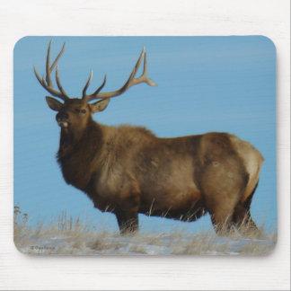 E0062 Bull Elk Sky Lined Mouse Pad
